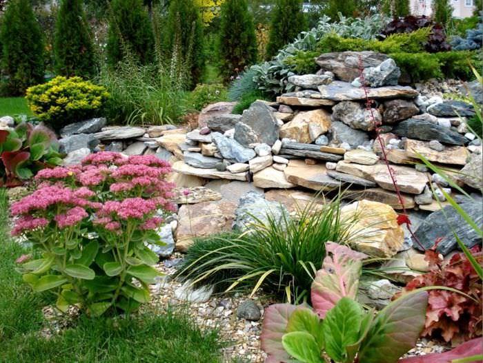 Камни и цветы на альпийской горке