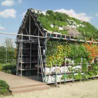 Выращивание цветов в стене и на крыше садового сарая
