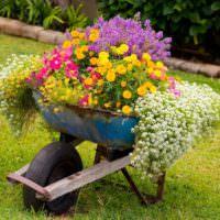 Старая тачка в роли садовой клумбы