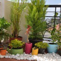 Растения в горшках для оформления маленького сада
