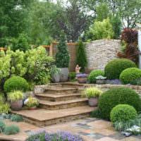 Шаровидные кустарники в дизайне частного сада