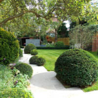 Шаровидные формы декоративных кустарников