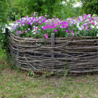 Клумба-плетень с цветущими петуньями