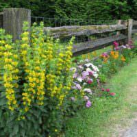 Желтые цветы вдоль деревянной ограды