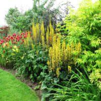 Цветы и кустарники в ландшафте сада