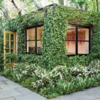 Вертикальное озеленение летней кухни