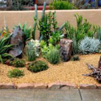 Южные растения в ландшафте садового участка