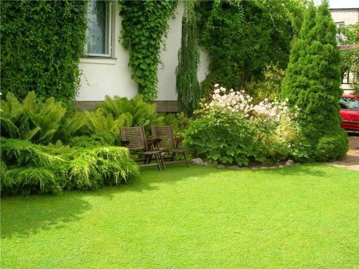 Партерный газон на садовом участке загородного дома