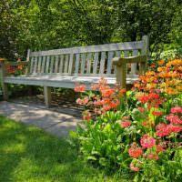 Красивые цветы возле садовой скамейки