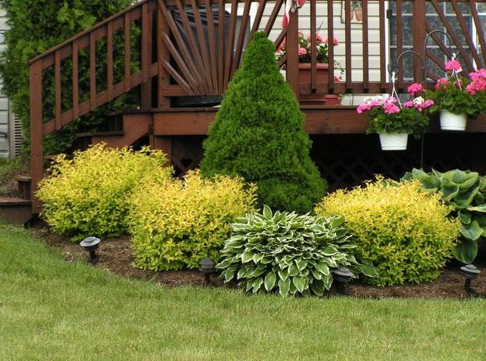 Клумба из кустарников перед террасой загородного дома