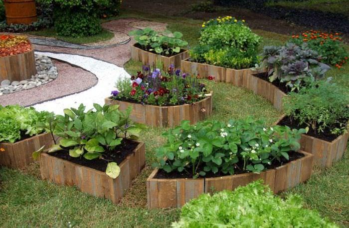 Аккуратные овощные грядки из досок в ландшафтном дизайне маленького сада