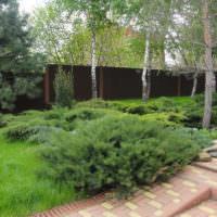 Казацкий можжевельник в саду загородного дома