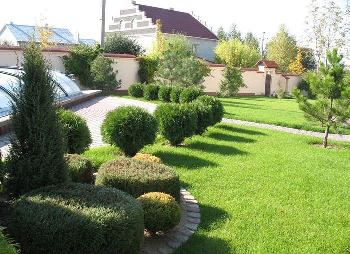 Декоративные кустарники в дизайне частного сада
