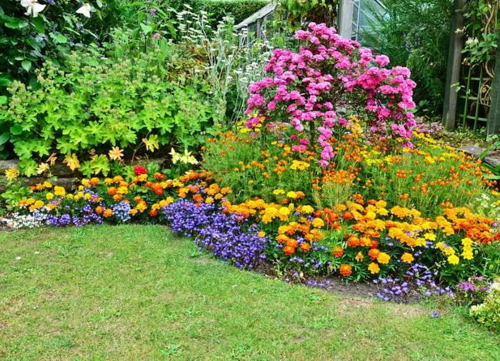 Миксбордер с цветущими многолетними растениями