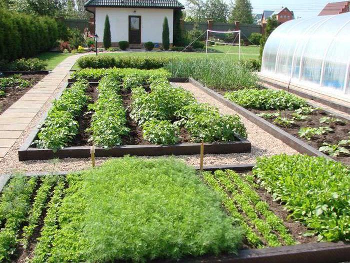 Красивое оформление овощных грядок на дачном участке