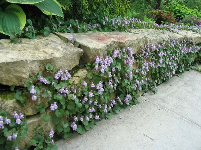 Невысокая подпорная стенка, сложенная из местного бутового камня