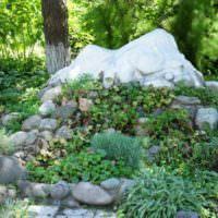 Альпийская горка с теневыносливыми растениями