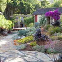 Южные растения в ландшафтном дизайне