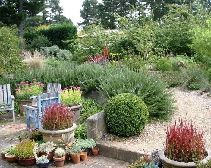 Кустарниковые растения для дачного сада