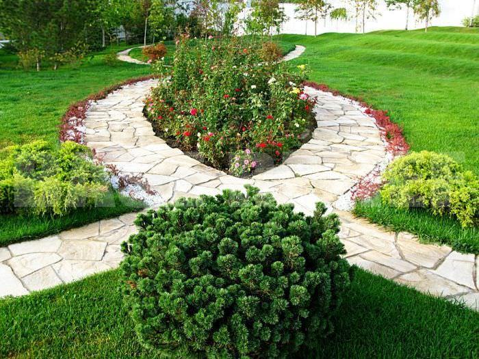 Садовая композиция из цветущих растений