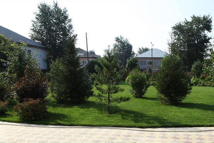 Лиственные и хвойные деревья в ландшафте дачного участка
