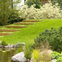 Холм с зеленой травой на загородном участке