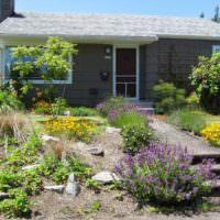 Полевые цветы в декорировании склона садового участка