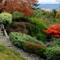 Кустарники и деревья на склоне дачного участка