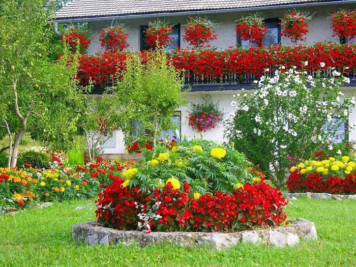 Садовая клумба с красными и желтыми цветами