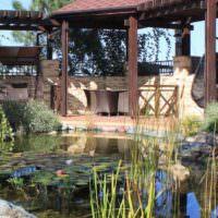 Водные растения в садовом водоеме