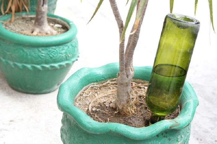 Лайфхак из бутылки для полива комнатных растений