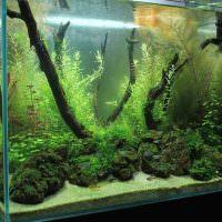 Декор аквариума корягами и камнями