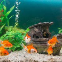 Маленькие оранжевые рыбки с прозрачными плавниками