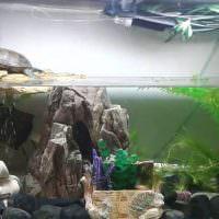 Аквариум для черепахи с надводной площадкой