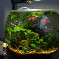 Круглый аквариум с красными рыбками