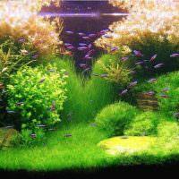 Мелкие рыбки среди водных растений