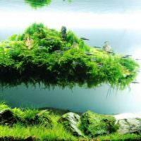 Плавучий остров из зеленого мха