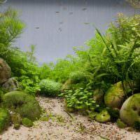 Имитация джунглей с помощью водорослей