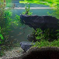 Подводная скала из природного камня