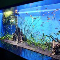 Домашний аквариум с чистой водой