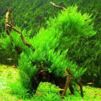 Речные водоросли зеленого цвета