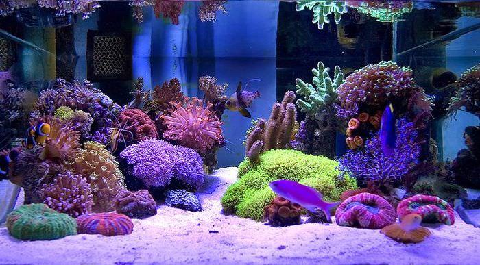 Красивый подводный мир с кораллами