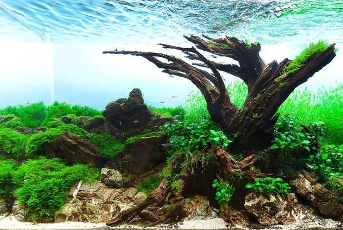 Корни дерева внутри аквариума