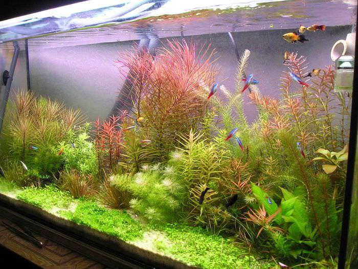 Разноцветные водные растения в домашнем аквариуме