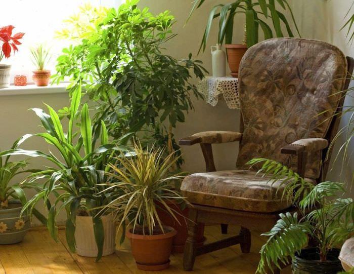 Коричневое кресло среди комнатных растений