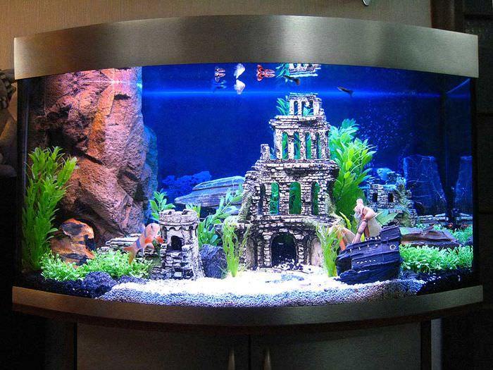 Панорамный аквариум со смотровым стеклом выпуклой формы