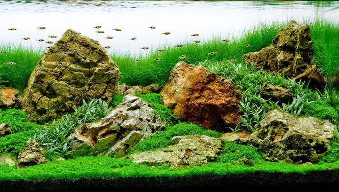 Камни различной формы на дне аквариума