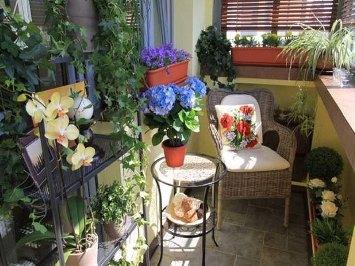 Выращивание комнатных цветов на балконе