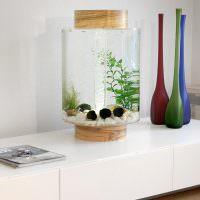 Декоративный аквариум небольшого размера