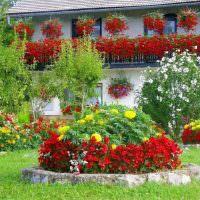 Красивая клумба с красными цветами